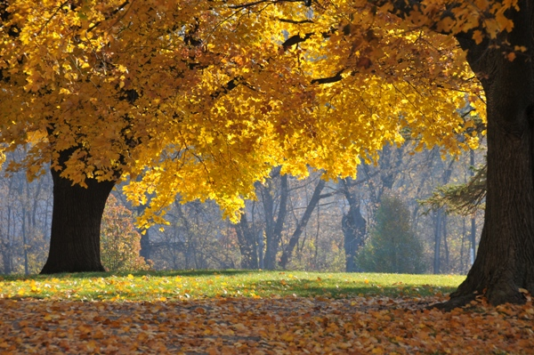 Autumn is Here and So is the Flu! Use These Tips to Avoid Getting Sick