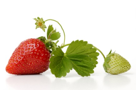 Strawberry Short-Cut: Leaves and Flowers are Edible, Too!