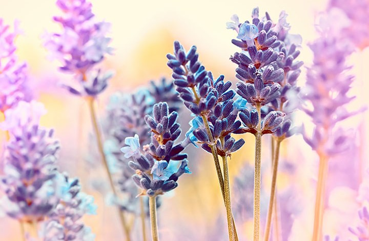 With Love From Lavender: A Do-It-Yourself Natural Hand Cream Recipe